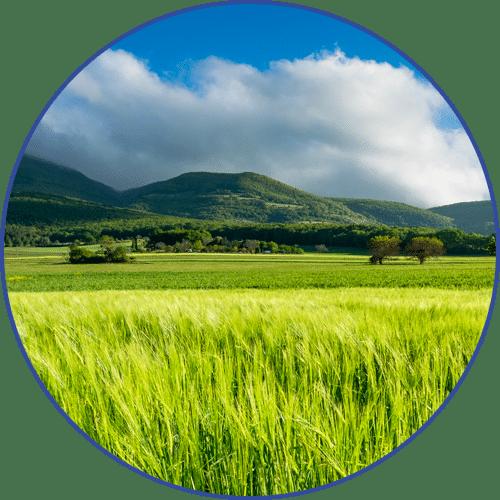 blé de la Drôme